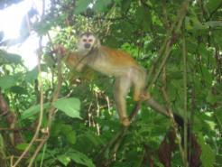 _wsb_246x194_monkey