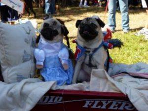 _wsb_330x228_costume+dogs